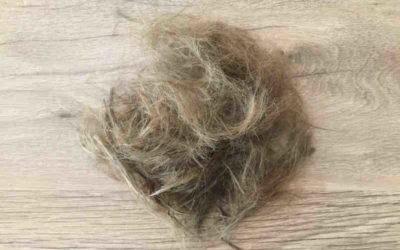 La coupe de cheveux au sabre